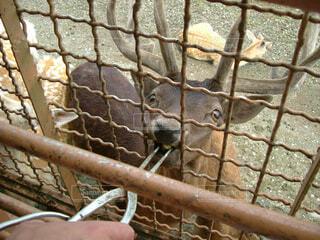 鹿の餌やりの写真・画像素材[1718178]