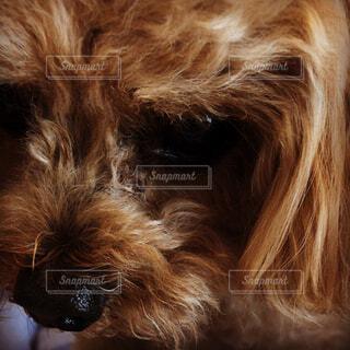 犬の接写の写真・画像素材[2108641]