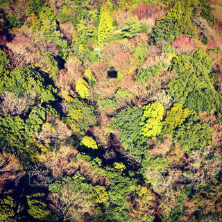 空中散歩の写真・画像素材[3082482]