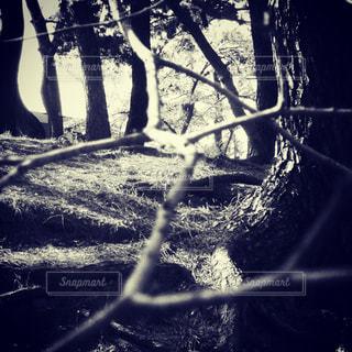 木のクローズアップの写真・画像素材[3112896]