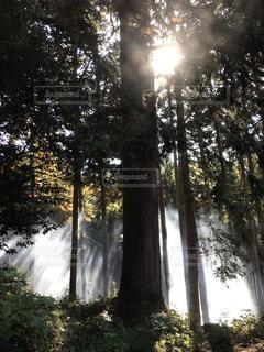 光さす森の写真・画像素材[1648437]