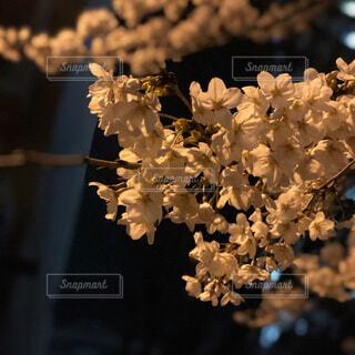 花のクローズアップの写真・画像素材[2135908]