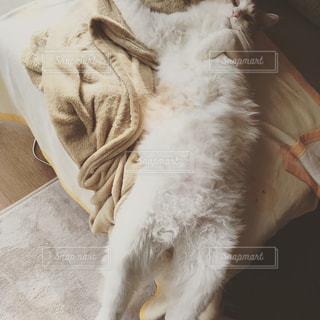 ベッドの上で横になっている猫の写真・画像素材[1518899]