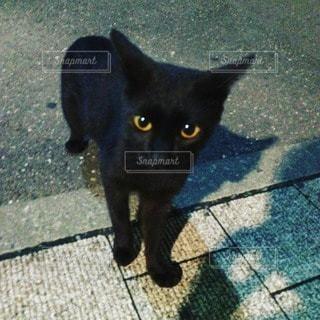 猫の写真・画像素材[50155]