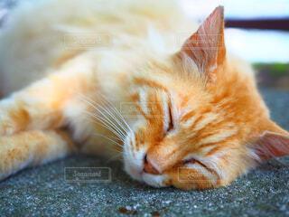 猫の休日の写真・画像素材[1520488]