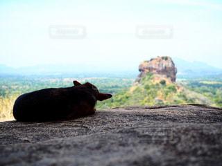 シギリアロックを見つめる犬の写真・画像素材[1521008]