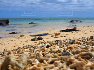 サンゴの果てにの写真・画像素材[2931252]