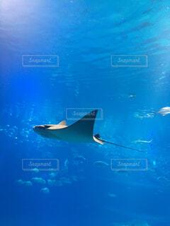 水面下を泳ぐ魚たちの写真・画像素材[1522162]