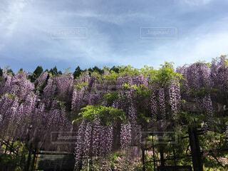 晴れた日にヤシの木のグループの写真・画像素材[1522504]