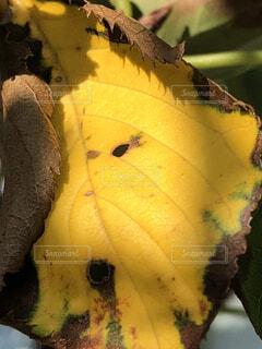 秋の落ち葉102の写真・画像素材[1523062]