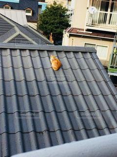 屋根の上の猫の写真・画像素材[1524503]