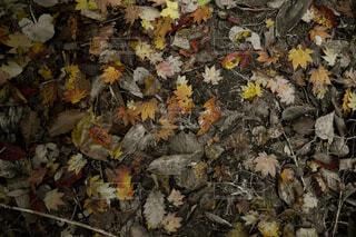 秋の散歩道の写真・画像素材[1525095]