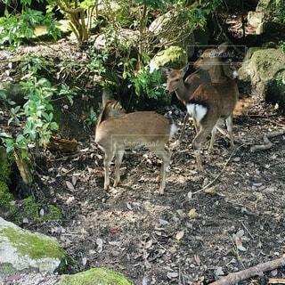 鹿の家族を見つけたよの写真・画像素材[2674938]