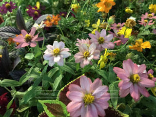 花々の写真・画像素材[1531801]
