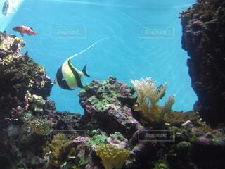 水Hawaiiの写真・画像素材[1535266]