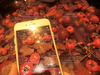ケータイの中の秋の写真・画像素材[1577547]