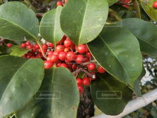 クリスマスカラーの写真・画像素材[1627888]
