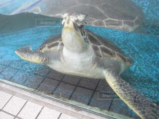 水の下で泳ぐ海亀の写真・画像素材[1740696]