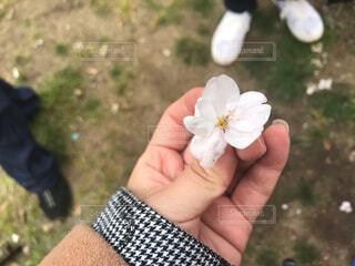 花を持っている手の写真・画像素材[1879019]