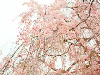 花の写真・画像素材[2030105]