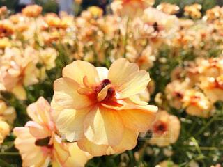 近くの花のアップの写真・画像素材[2082384]