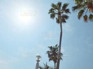 ツリーの横にあるヤシの木のグループの写真・画像素材[2082390]