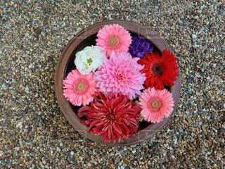 ピンクの花がボウルに入っているの写真・画像素材[2100274]