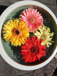 花のクローズアップの写真・画像素材[2100276]