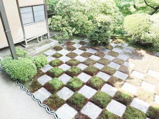 庭の接写の写真・画像素材[2105076]