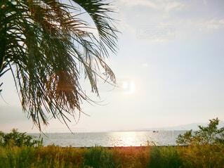 水域の隣のヤシの木のグループの写真・画像素材[2115791]