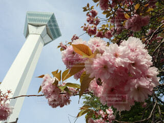 花のクローズアップの写真・画像素材[2179891]