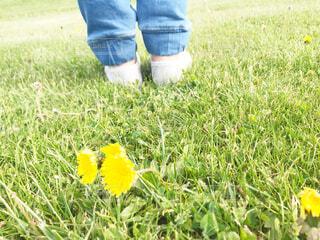 野原の黄色い花の写真・画像素材[2207272]