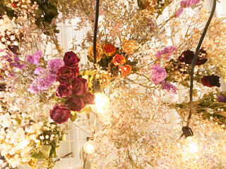 花の写真・画像素材[2257276]