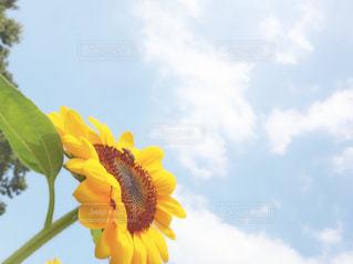 花のクローズアップの写真・画像素材[2355025]