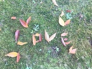 秋の写真・画像素材[2733450]