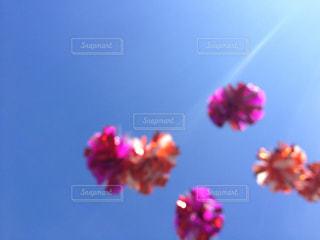 空飛ぶポンポンの写真・画像素材[2088301]