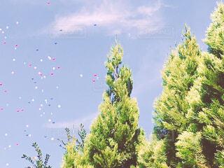空に放たれる風船の写真・画像素材[1528543]