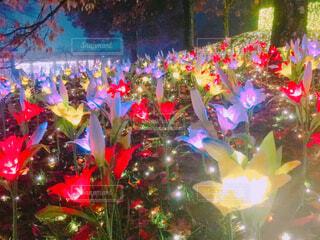 光るお花畑〜妖精の森〜の写真・画像素材[2757540]