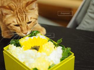 猫と箱と誕生日の写真・画像素材[1530397]