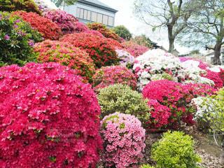 花の写真・画像素材[2053346]
