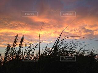 夕暮れの空の写真・画像素材[1531788]