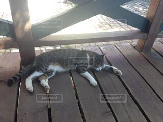 木製のベンチの上に横になっている猫の写真・画像素材[1535948]