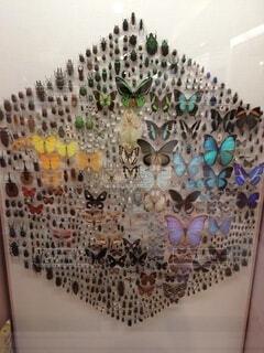 美しい色の昆虫たちの写真・画像素材[4025224]