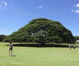 この木なんの木の写真・画像素材[4032317]