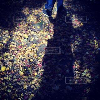 男性の足元と紅葉絨毯の写真・画像素材[1530581]