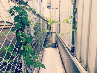 フェンスから壁につたう蔦の生命力の写真・画像素材[1530585]