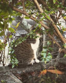 塀に座る猫の写真・画像素材[1530587]