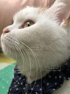 近くに猫のアップの写真・画像素材[1531444]