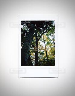 自然・風景・秋の写真・画像素材[1538233]