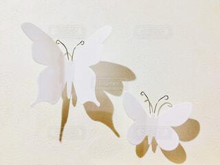 蝶々の写真・画像素材[1776457]